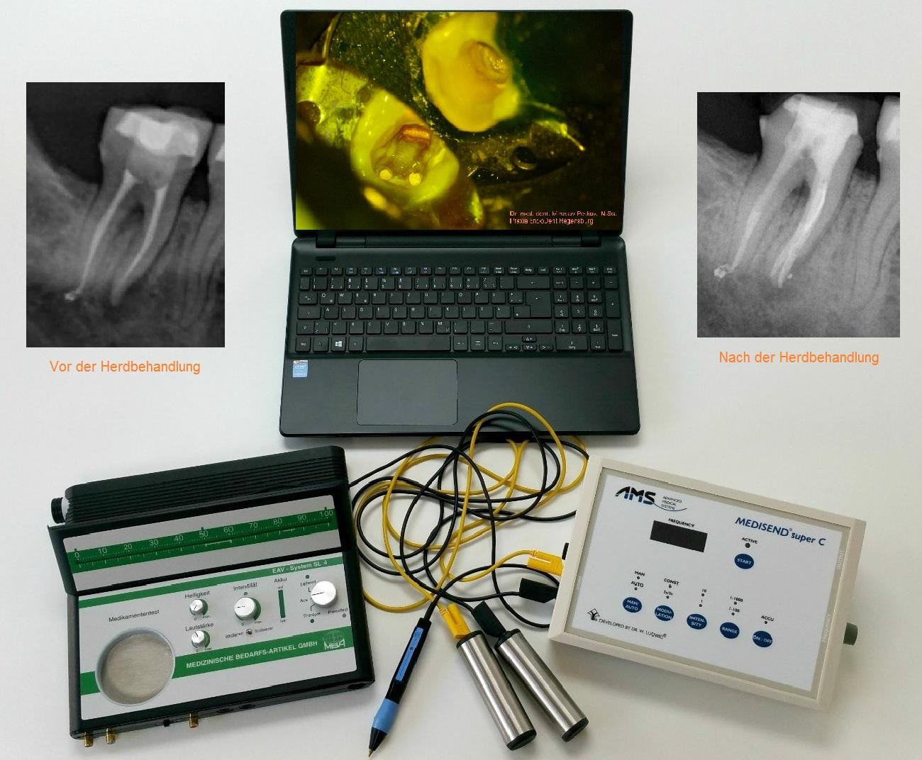 herddiagnostik praxis für endodontie regensburg